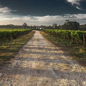 Ein Schotterweg am Weinhang