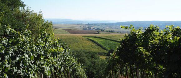 Wein aus Niederösterreich