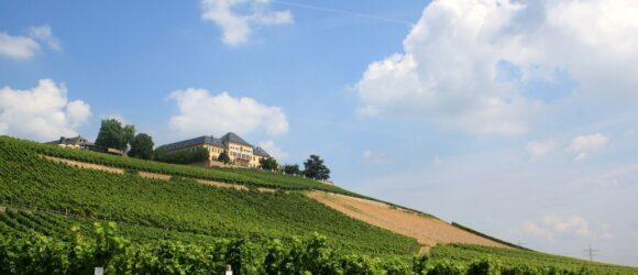 Schloss Johannisberg vor Weinberg