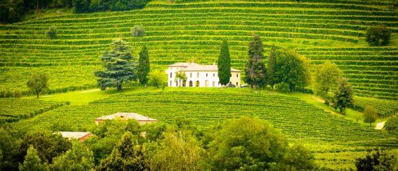 Urlaub auf einem Weingut