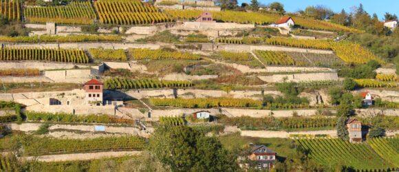 Saale-Unstrut Weinregion Weinanbau