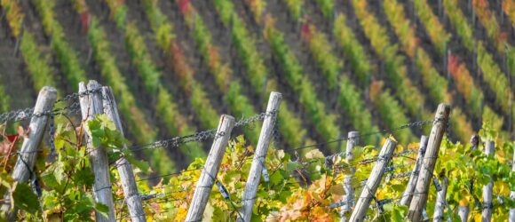 Weinbaugebiet Ahr