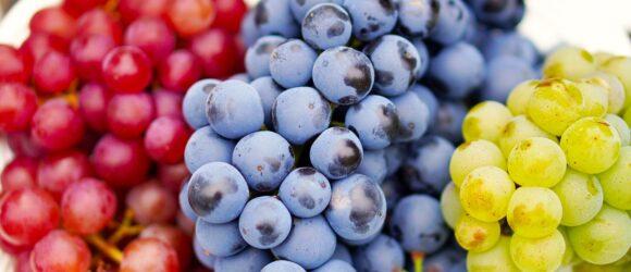 Rote, Blaue und Grüne Trauben