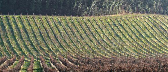 Terroir Franken Wein