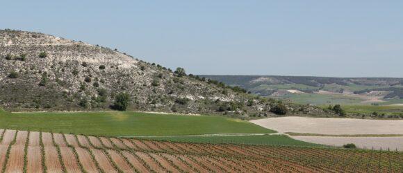 Spanien Weinanbau